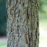 Holz-Birne IMG_0644